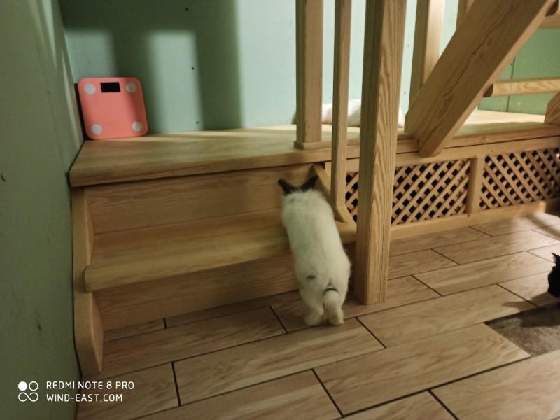 Следуй за Белым Кроликом