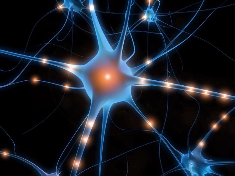 мозг аксоны нейроны