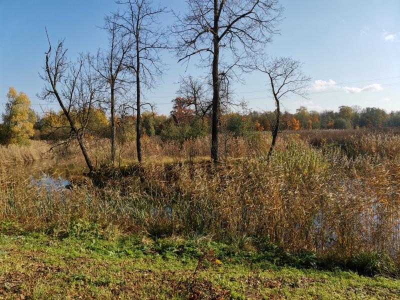 Парк с прудом в форме лука