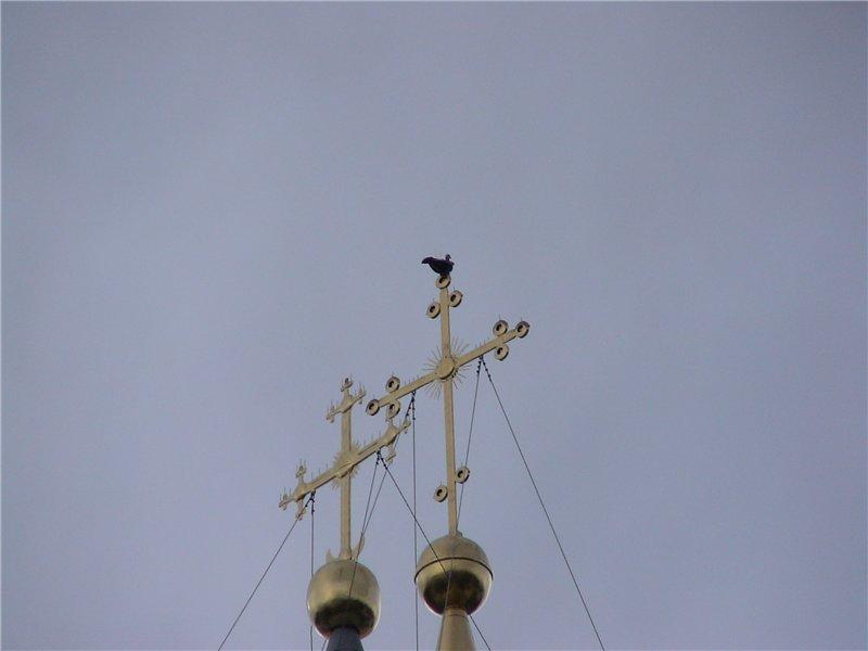 Знаменитый голубь на кресте Святой Софии.