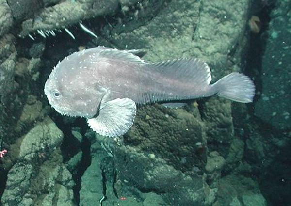 ryba-kaplya2
