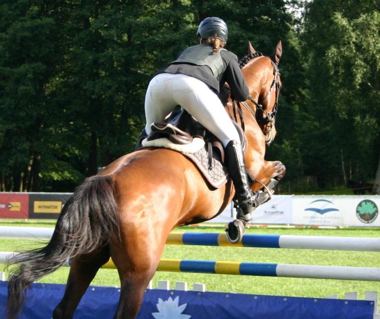 horse10