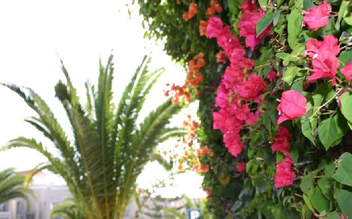 flowers-Tenerife