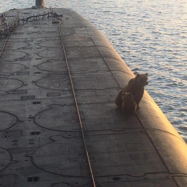 Очень печальная история про медведицу, медвежонка и атомную подводную лодку