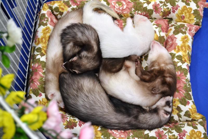 Для любителей кошек, грызунов и прочей - не всегда пушистой - живности
