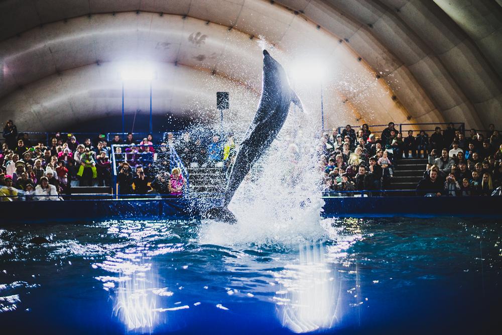 фото из дельфинария красноярск покрытие латекс-пластик можно