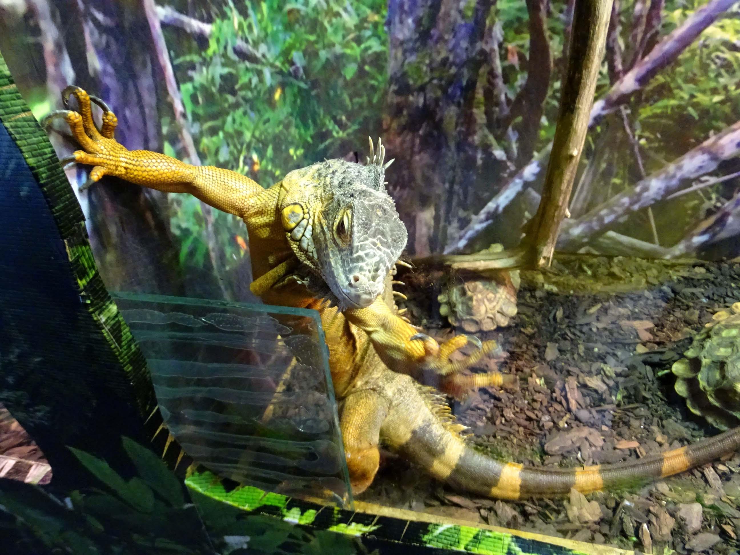 каких пресмыкающихся ты видел в зоопарке