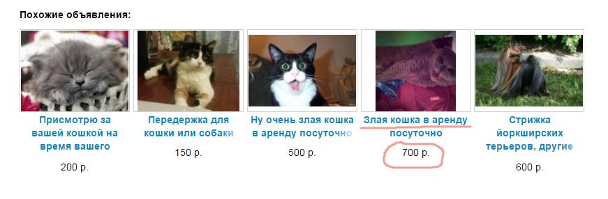 2015-03-13 09-48-44 Услуги - Злая кошка в аренду посуточно в Ростовской области предложение и поиск услуг на Avito - Google
