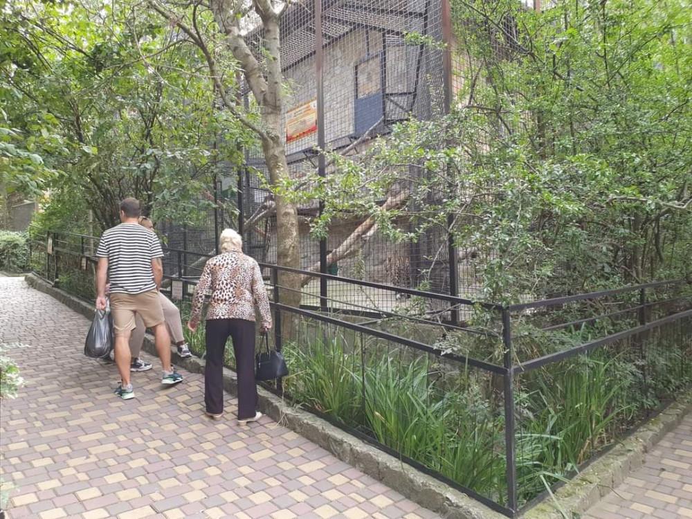 Сегодня в Ялтинском зоопарке, один чел поймал момент и снял на фото, как леопард подкрадывается к зебре...