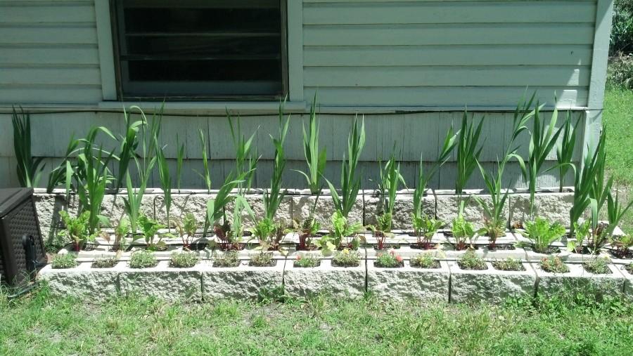 Redneck Garden May 18