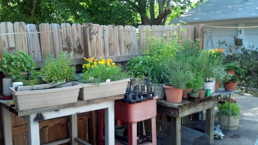 Herb Garden May 18
