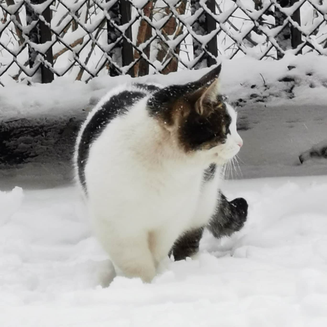 Ну и наша любимая дворовая кошечка по имени Пятнистая.