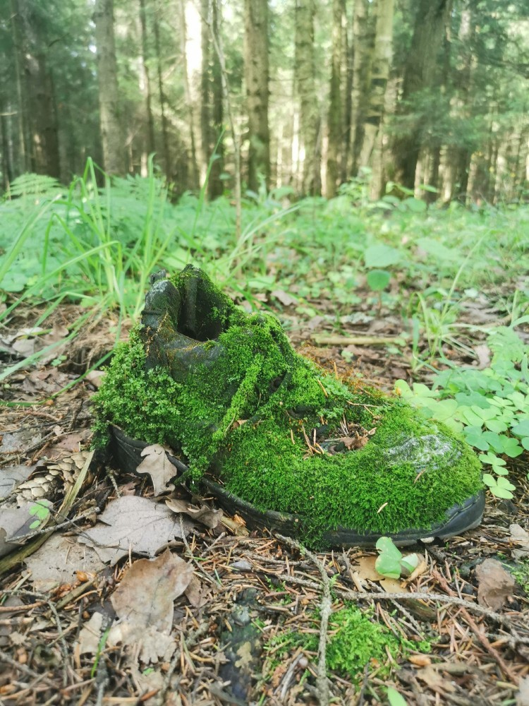 Ботинок Лесовика