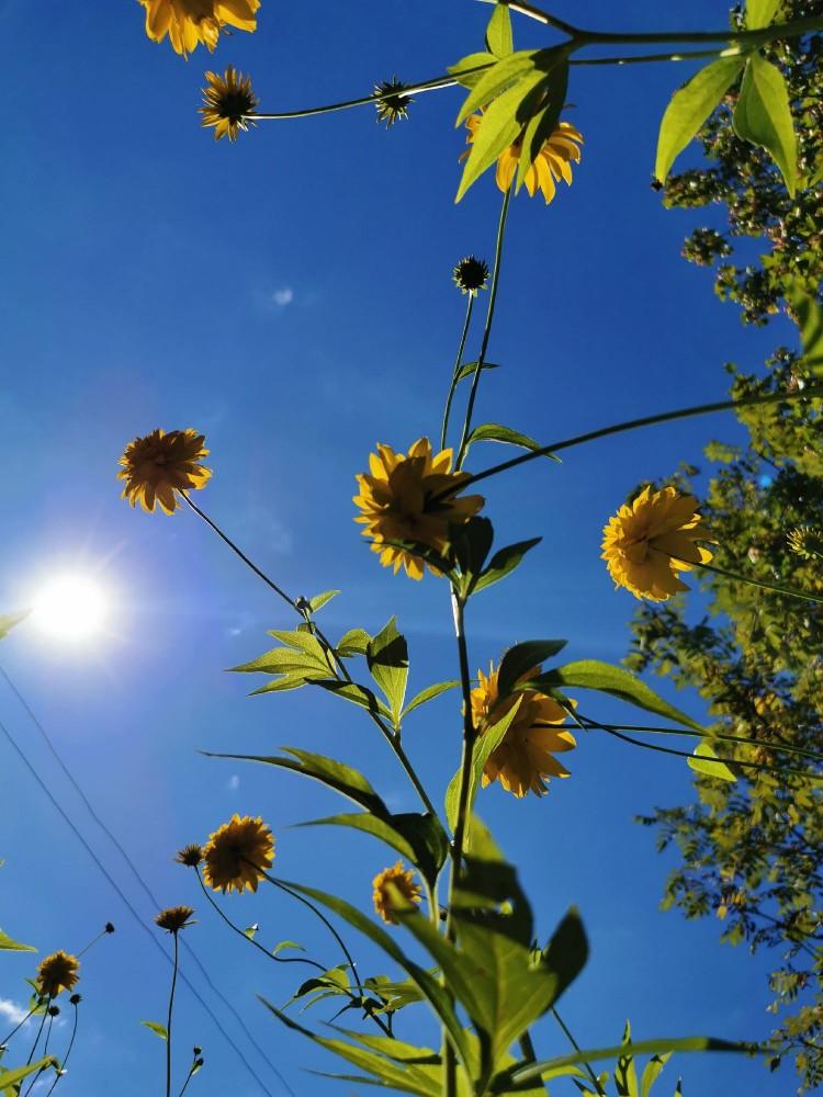 Солнце, освещающее шары