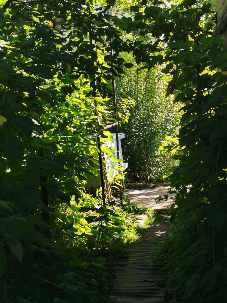 Зелёный коридор, освещенный солнцем