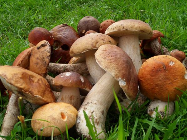 грибы-2012 август