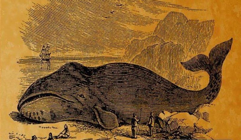 Синий кит, выбросившийся 89 лет назад на побережье Саудовской Аравии