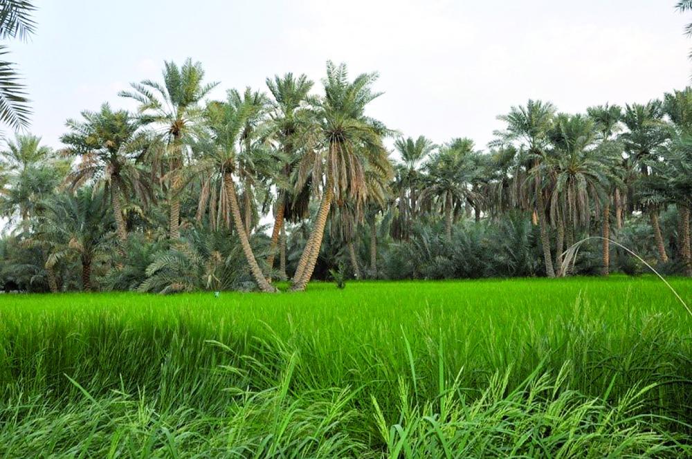Оазис Ахса официально внесён в список всемирного наследия