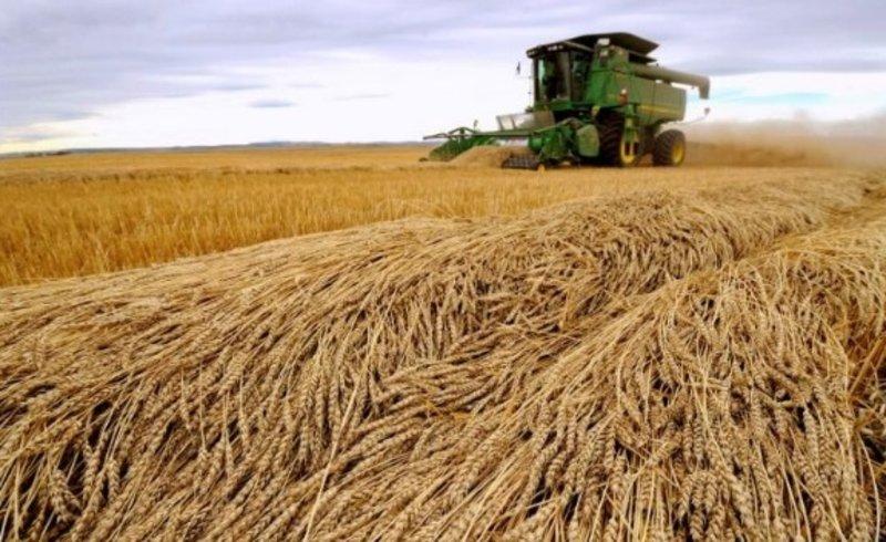 Зерновой фонд Саудии объявил о приостановке закупок канадской пшеницы и ячменя