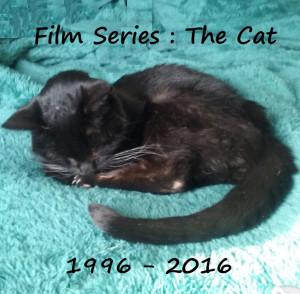 Bye, kitty baby...