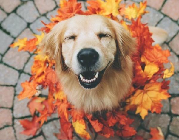 картинка_собака_счастливый_пес