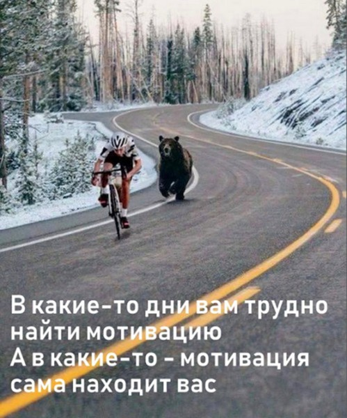 плакатик_мотивация_сама_находит_вас_медведь