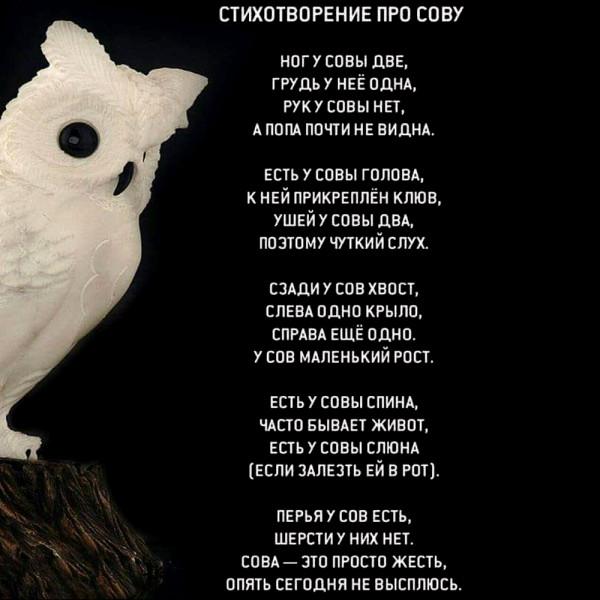 юмор_стих_про_сову