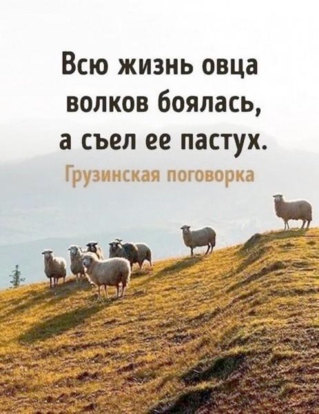 овца_волков_боялась_а_съел_ее_пастух