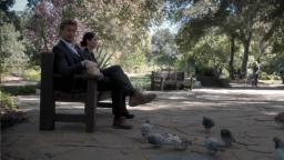 pigeonsinpark