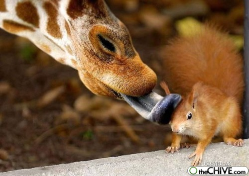 animals-in-action-6