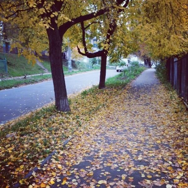 /осень у дома/