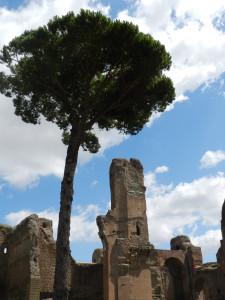 Roma 2014 407
