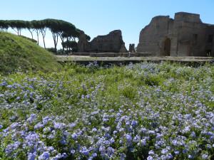 Roma 2014 603