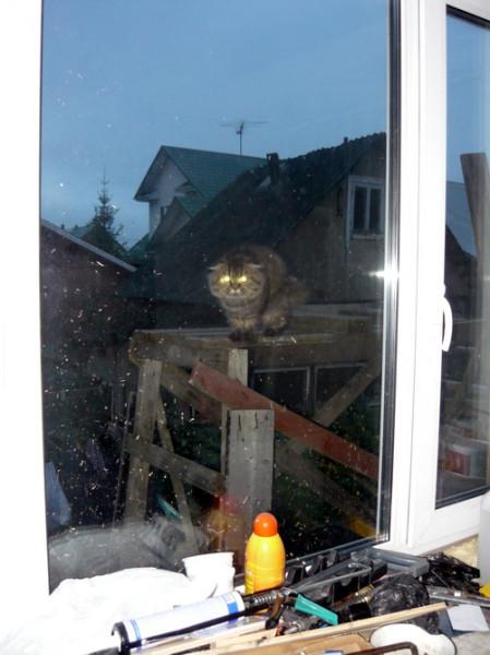 бублик за окном