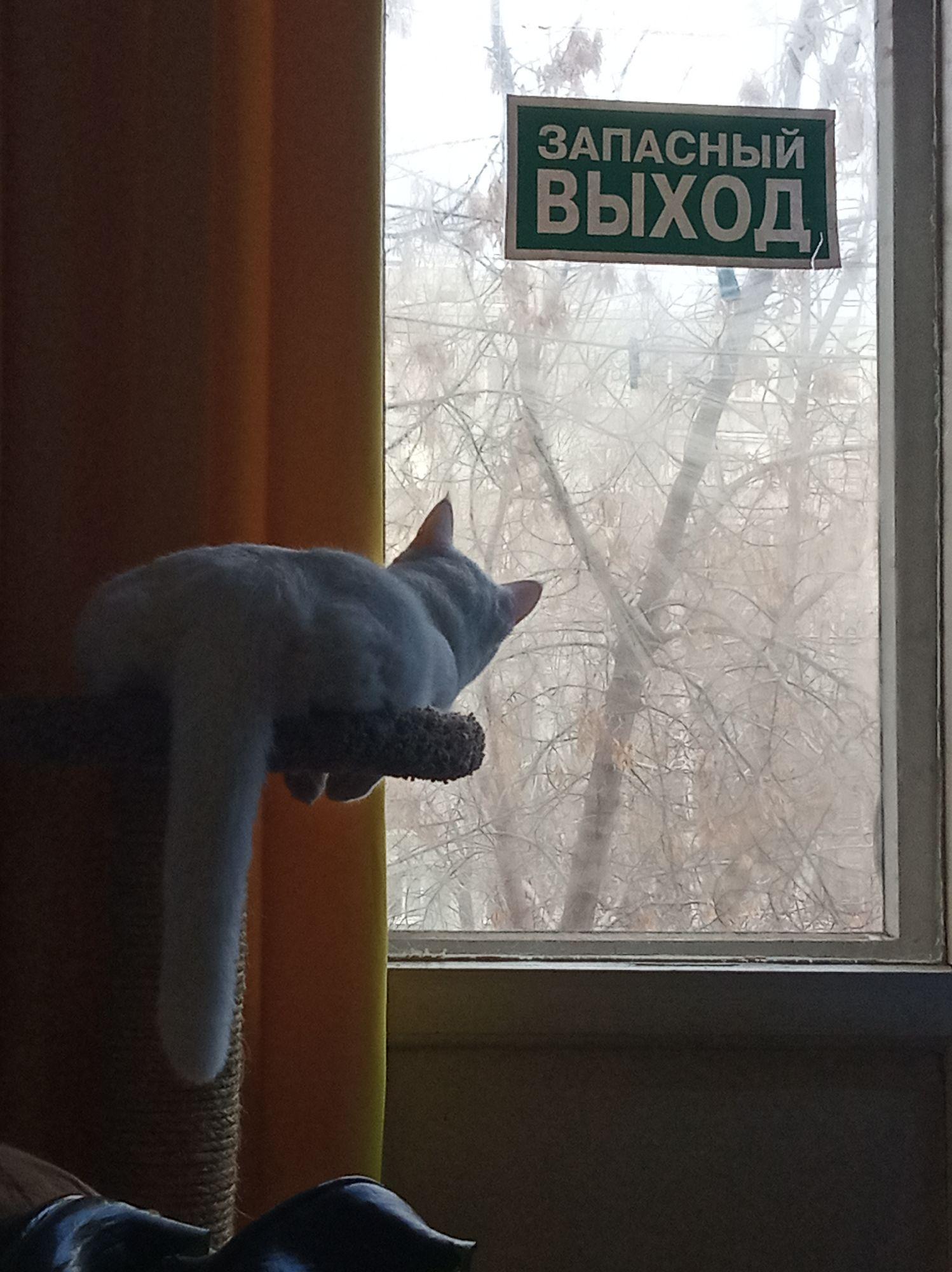 Клопик бдит))) ждёт птичек)))