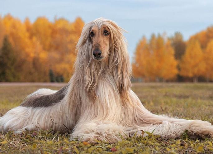 В Челнах состоялась Всероссийская выставка собак «Камские Зори»