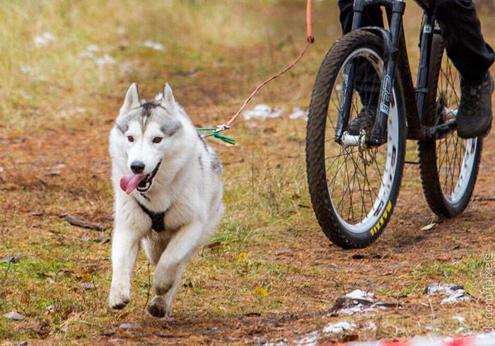 Челнинка со своими питомцами стала победителем гонок «Вперёд, Акбай!»