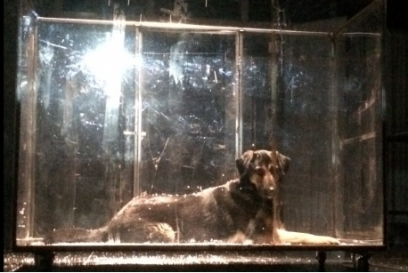 На сцену театра «Мастеровые» выйдет собака Чага