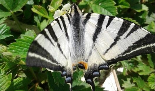 Под Набережными Челнами нашли редчайшее насекомое