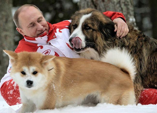 Владимир Путин выделил деньги на создание в Челнах площадки для выгула собак