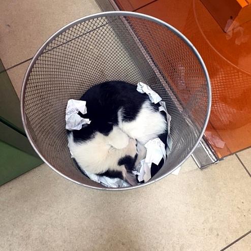 Кошка облюбовала мусорную корзину с чеками «Сбербанка»