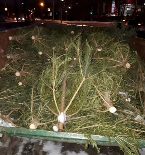 Сознательные челнинцы в первый же день заполнили деревьями пункт приема ёлок