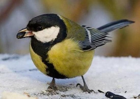 «Человек обязан помочь птицам зимой!»