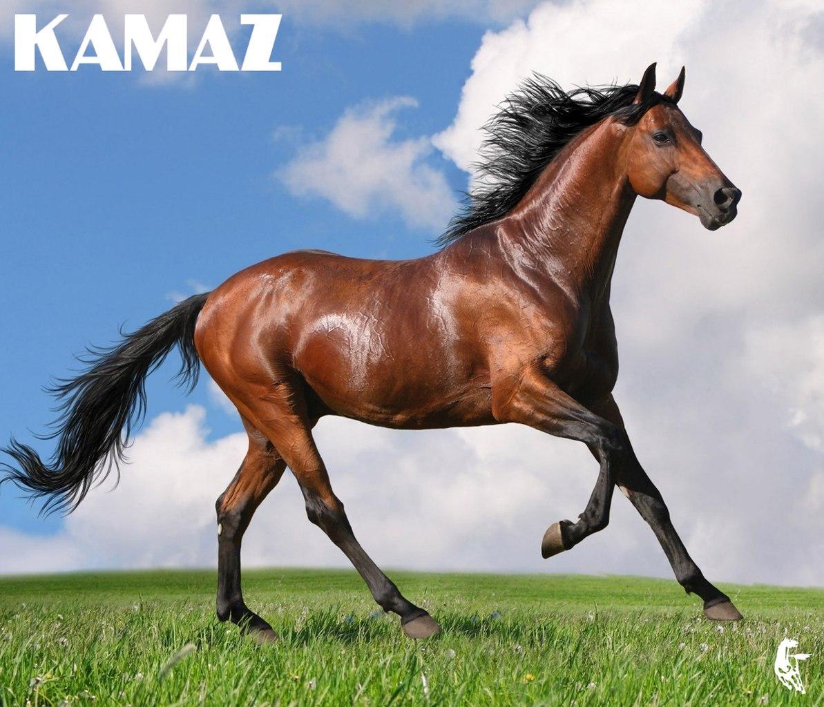 Аргамак — логотип «КАМАЗа»