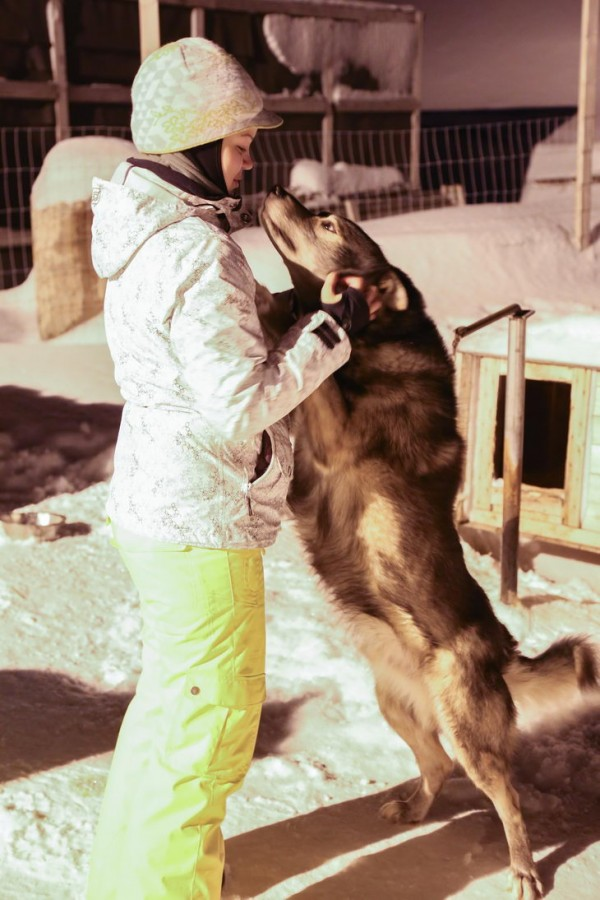 Карина и собаки