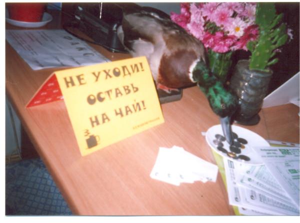 фото, юмор, Елена Каминская