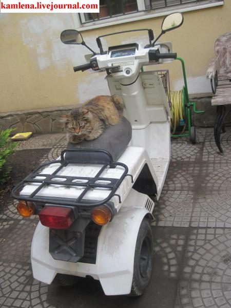 Котоцикл