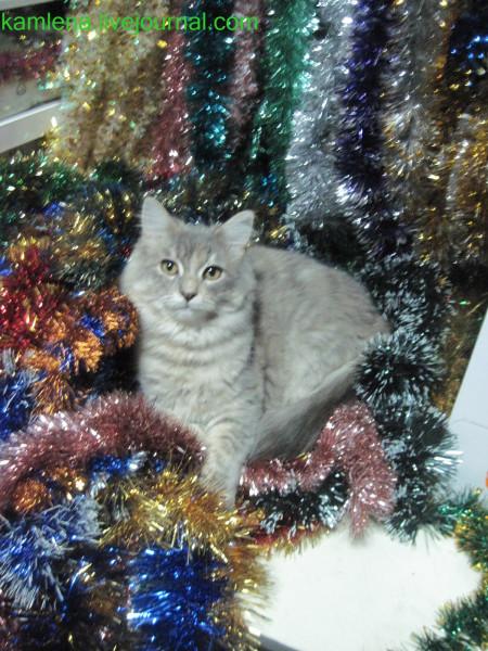 кошка, новогодняя фотка