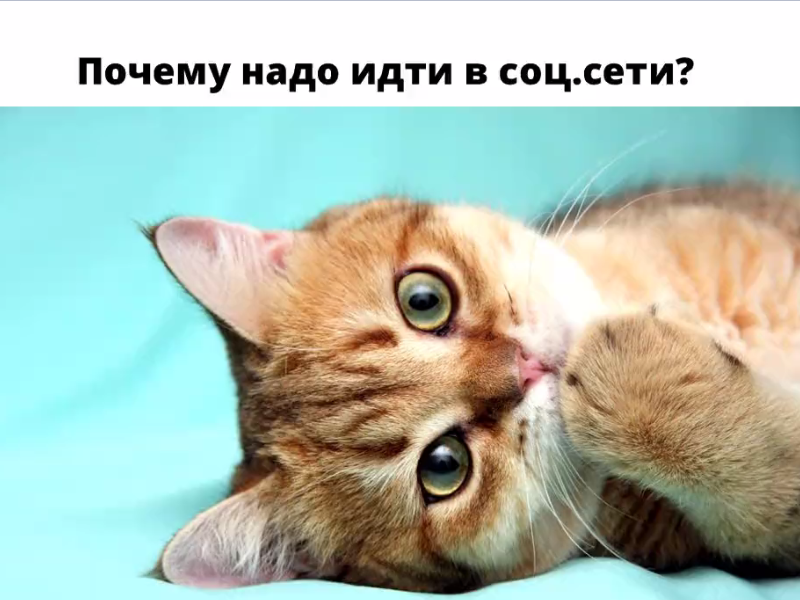 В соцсети за котиком