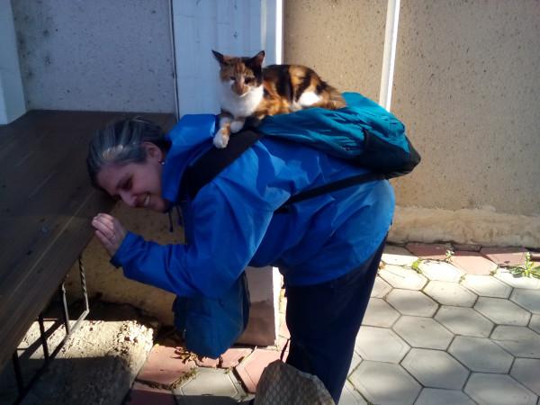 кошка-массажистка